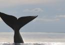 """Charla: """"Ballenas en Necochea: estudiando y protegiendo las Ballenas Francas de Argentina"""""""